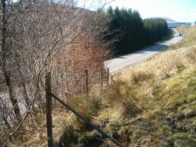 Fence, copse and the main road to Campbeltown