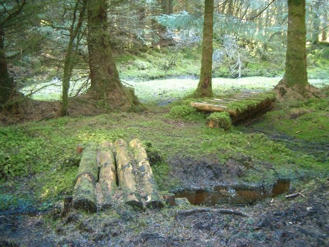 The way through the bog