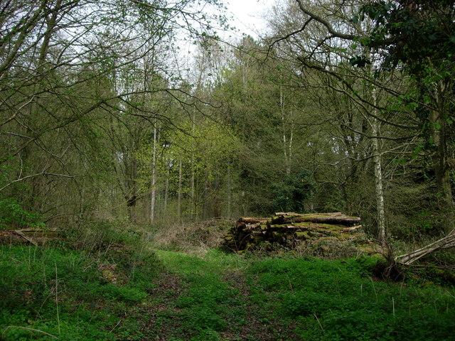 Breeches Wood - Chiddingstone Causeway