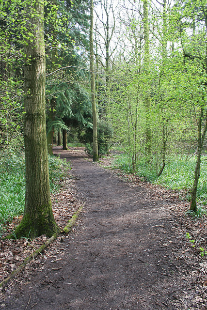 Martinshaw Wood, Groby