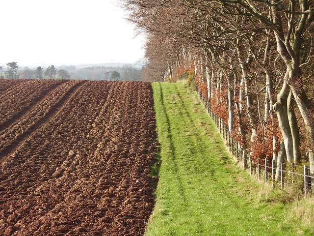 Field margin, Leaston