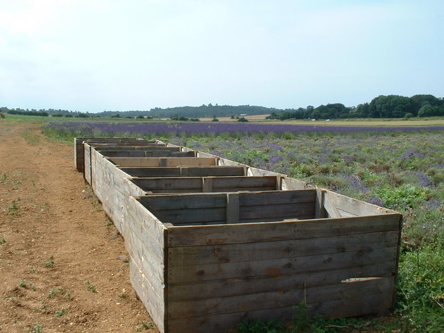 Wooden storage containers for lavender.