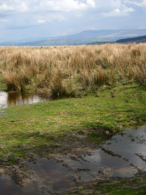 Boggy Ground