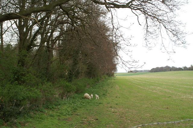 On the edge of Fitzwalter Wood, near Adisham