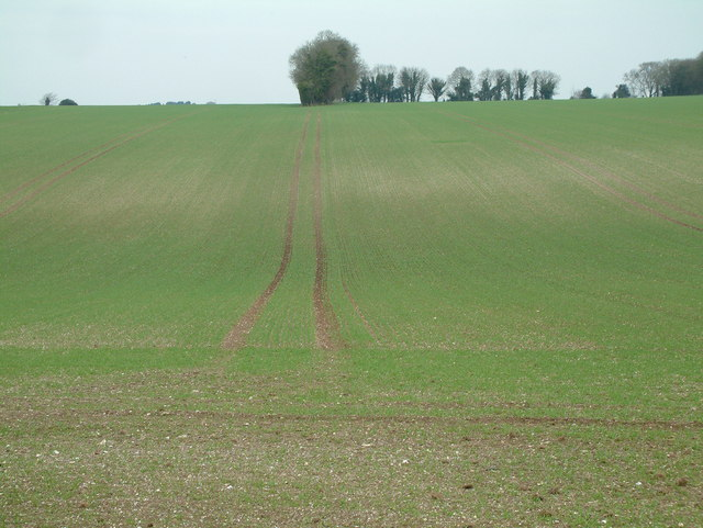 Farmland, Dorset