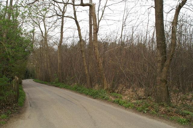 In Bigbury Wood on the Pilgrims Way