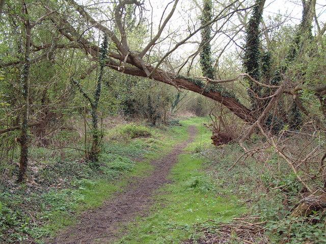 Footpath near Wraysbury