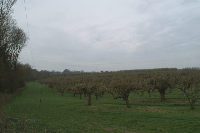 Orchard near Petty France