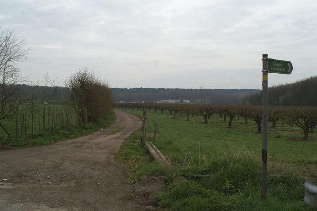 Orchard on Denstead Lane
