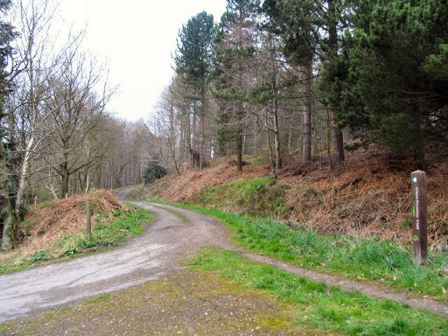 Wharncliffe Woods