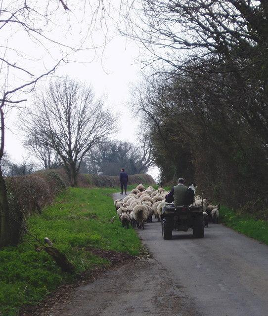 New style shepherding