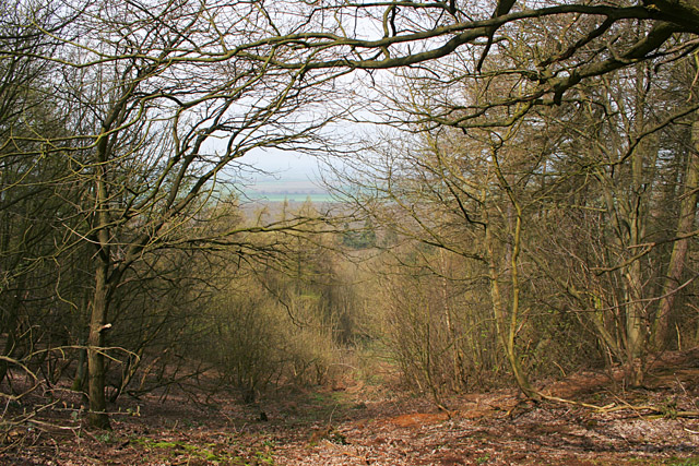 In Stathern Wood