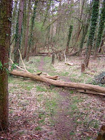 Woodland Path Near Dykebar Hospital