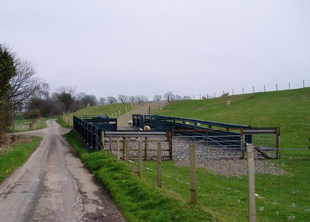Sheepfold near Segwen Farm