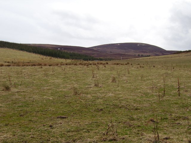 Rough field, Lealty