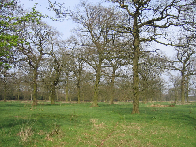 Brockhill Wood