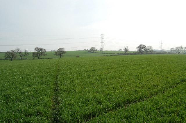Open Farmland