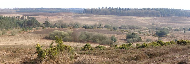 View from Hampton Ridge towards Hasley Hill, New Forest