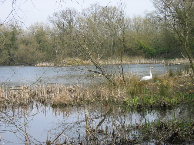 Joe's Pond Rainton Meadows Nature Reserve