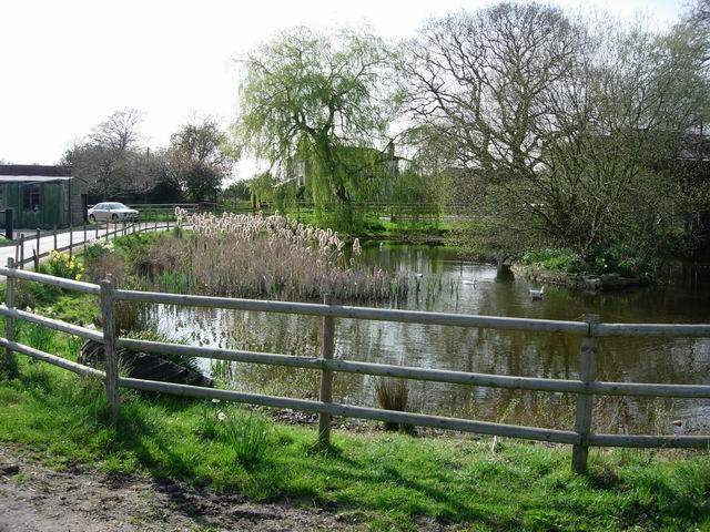Farmyard Pond