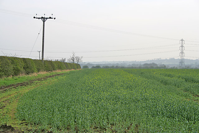 Oilseed rape field near Long Clawson, Leicestershire