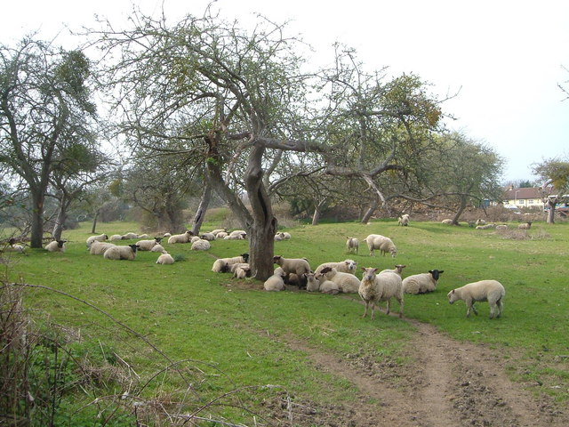Orchard, Horton