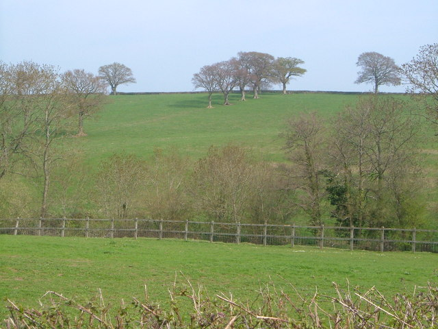 Trees on Barrington Hill