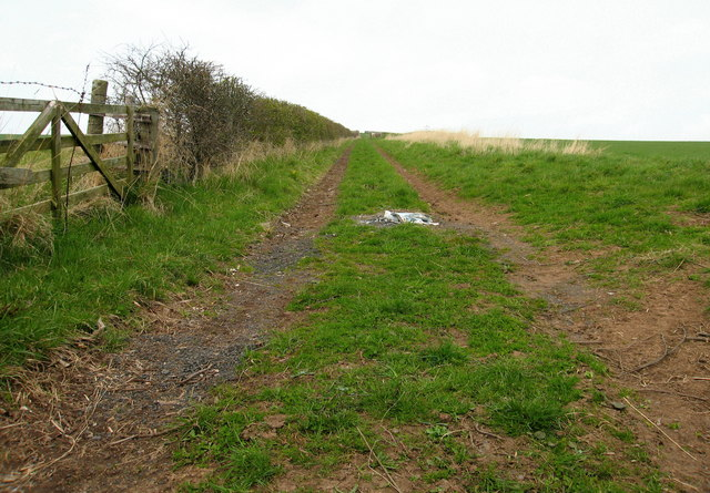 Track to Gallows Law