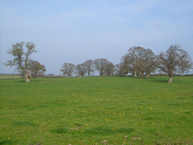 Field near Staple Fitzpaine