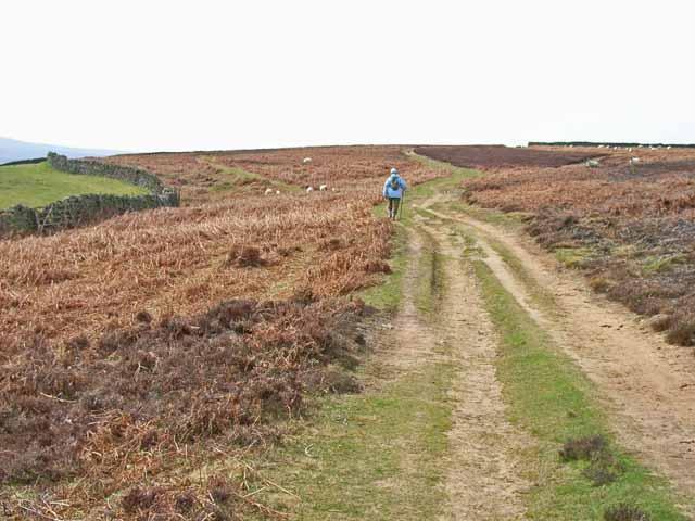 Lead Mining Trail on Edmondbyers Common