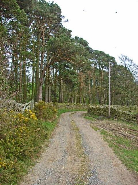 Pinewood near Edmondbyers