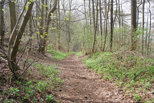 Stathern Wood