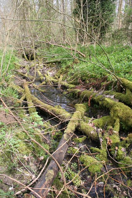 Plungar Wood
