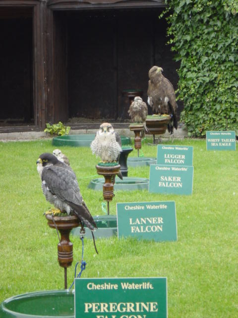 Birds of Prey at Blakemere