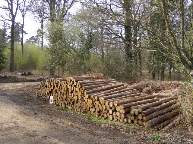 Timber stack in the Hasley Inclosure, New Forest
