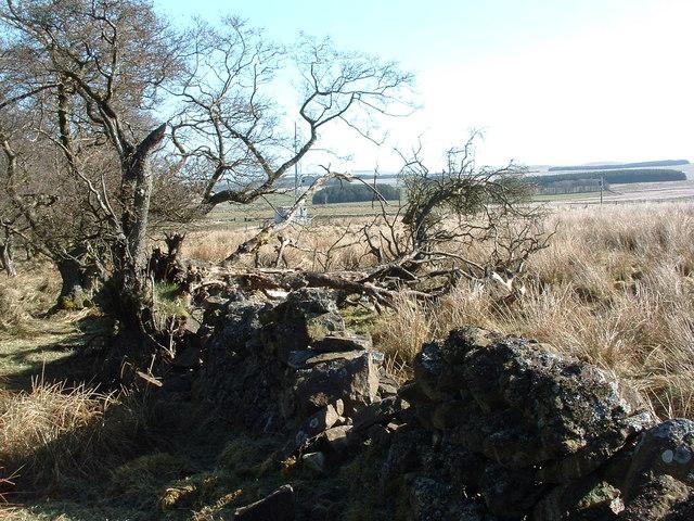 Maidenhill Plantation