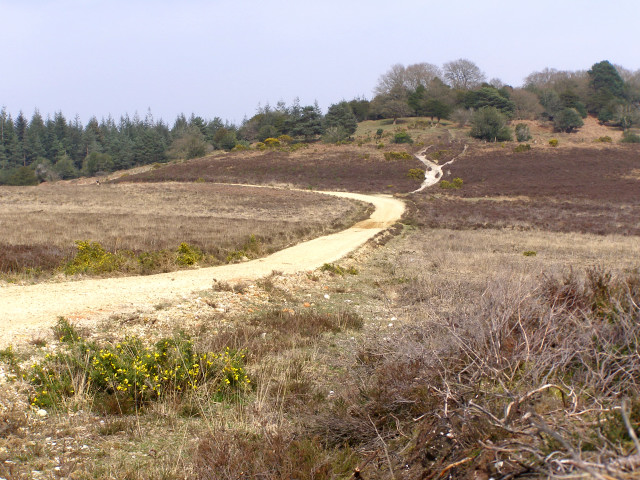 Track from Hasley Inclosure to Sloden Inclosure, New Forest