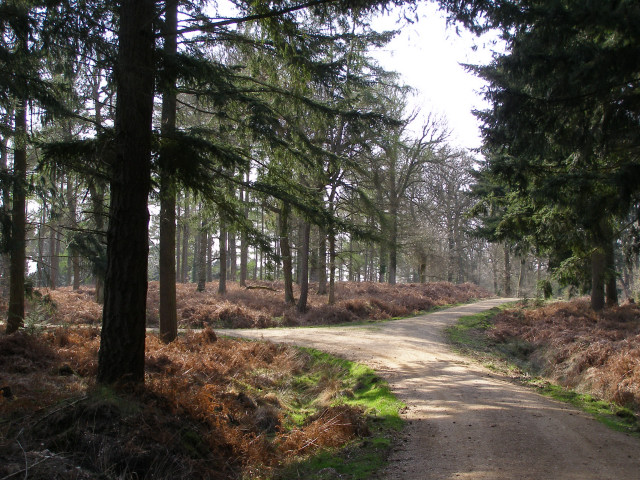 Junction of tracks in the Sloden Inclosure, New Forest