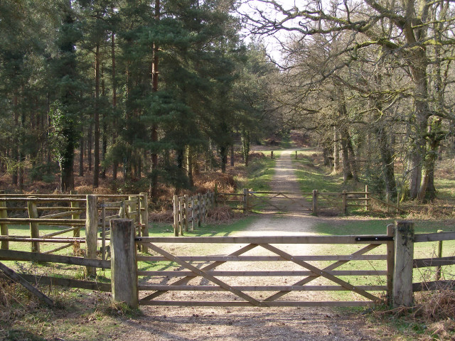 Driftway between Sloden and Alderhill Inclosures, New Forest