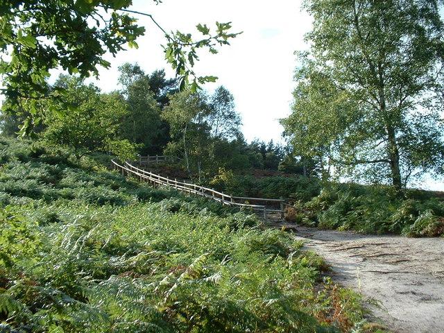The new wooden path at Dersingham Bog.