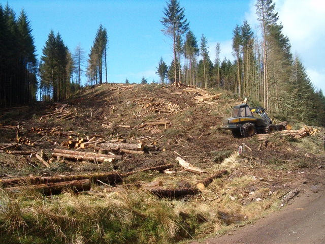 Felling in Kilmartin Forest