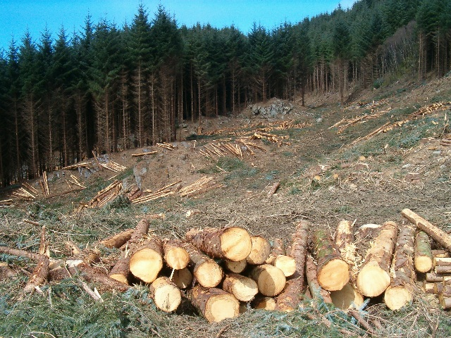 Freshly-felled timber
