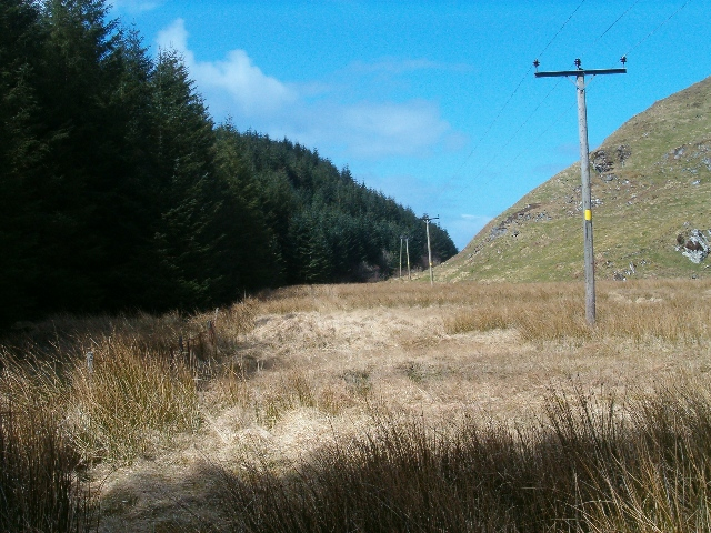 Electricity poles beside Kilmartin Forest