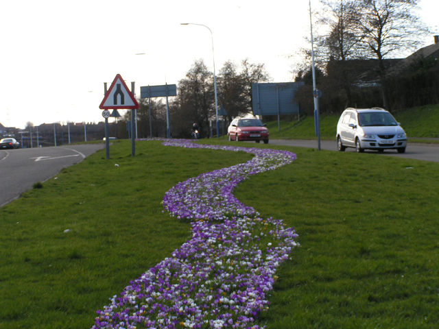 Follow the Blue Crocus Road