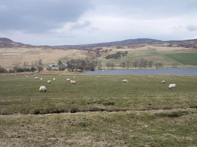Pasture by Loch Freuchie