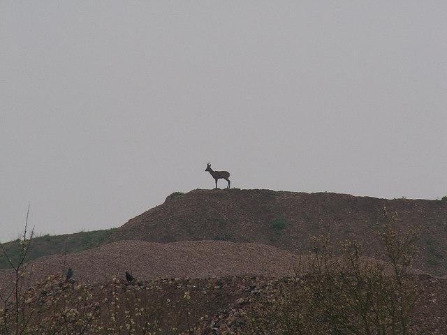 Monarch of the Glen/Alver Valley