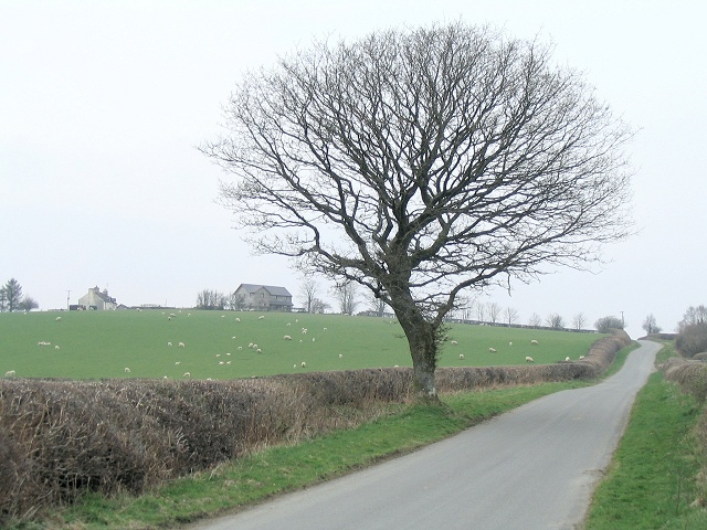 Tree beside the Roman road north to Beulah
