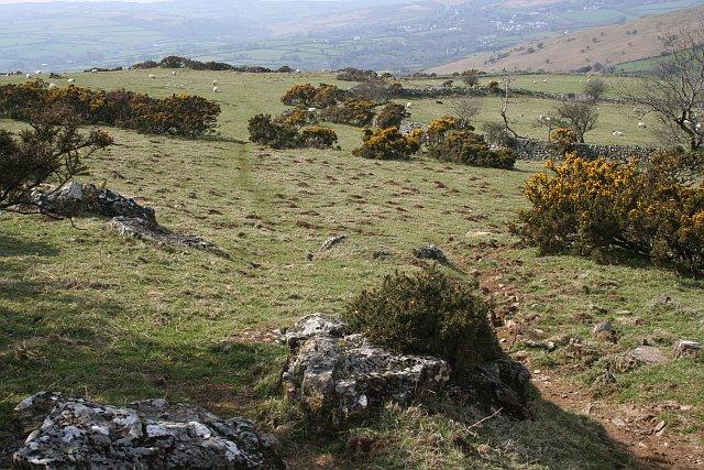 High Sheep Pasture west of Dartmoor