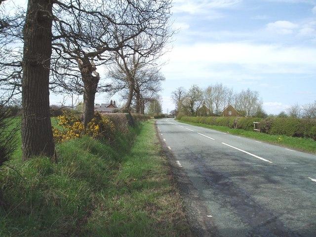 Penny's Lane, Lach Dennis