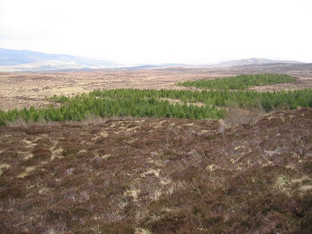 Forestry by the Allt an Loin Ruaidh
